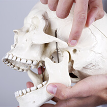 Astoria TMJ Therapy person holding model skull